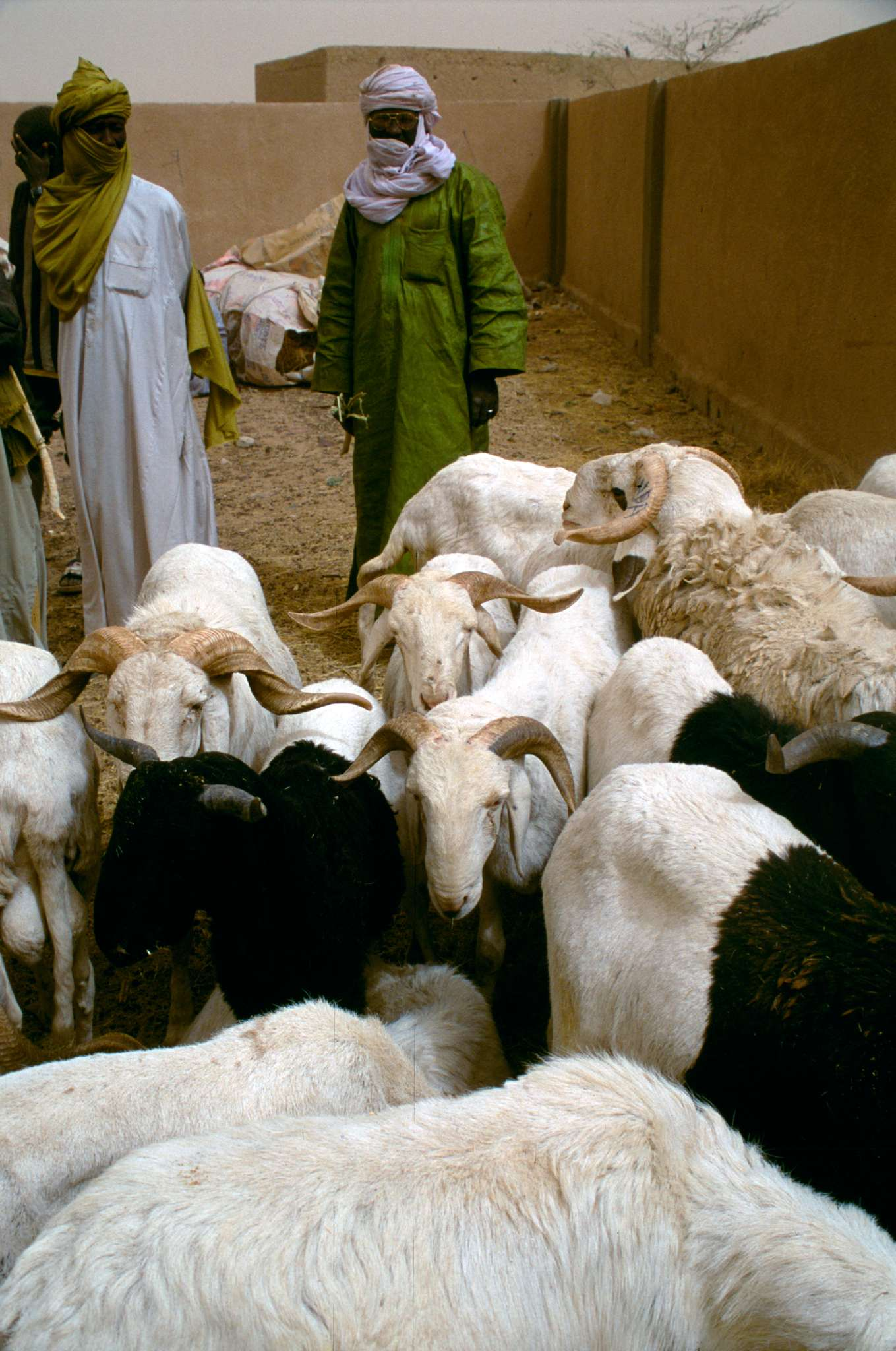 shepherds and flock of sheep in a market